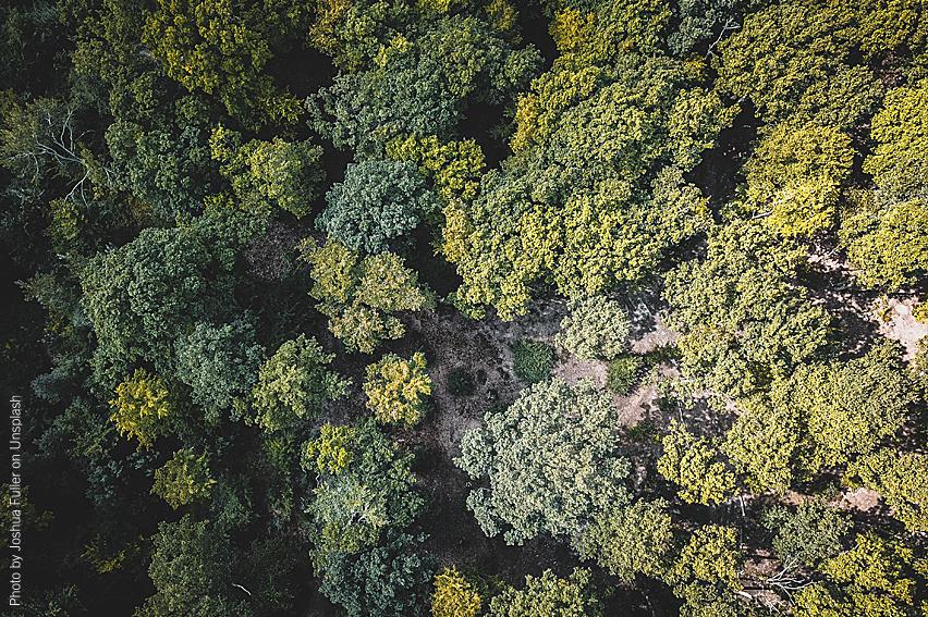 Skogslandskap fotat ovanifrån med drönare